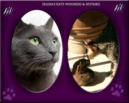 selina-kyles-cats-whiskers-and-nutmeg